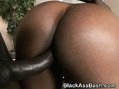big-titty-and-ass-black-girl-doggystyled-in-threesome